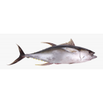 Buy Tuna Fish - Boneless & Skin Less Fish - Curry Cut Online